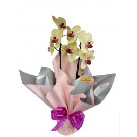 Orquídea Decorada(cores variadas)