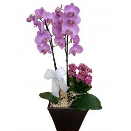 Orquídea 2 Hastes No Cachepô