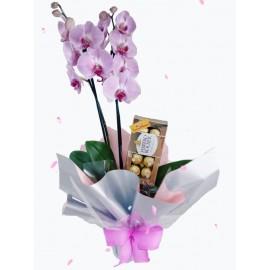 Orquídea Decorada + Ferrero Rocher (cores variadas)