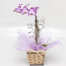 Orquídea No Cachepô